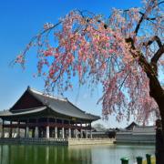 사진 | 경회루 누각  (제공 | 문화재청)