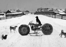 '동물농장(Animal farm)', 솔로브키, 백해, 러시아(1992) :공근혜갤러리 제공